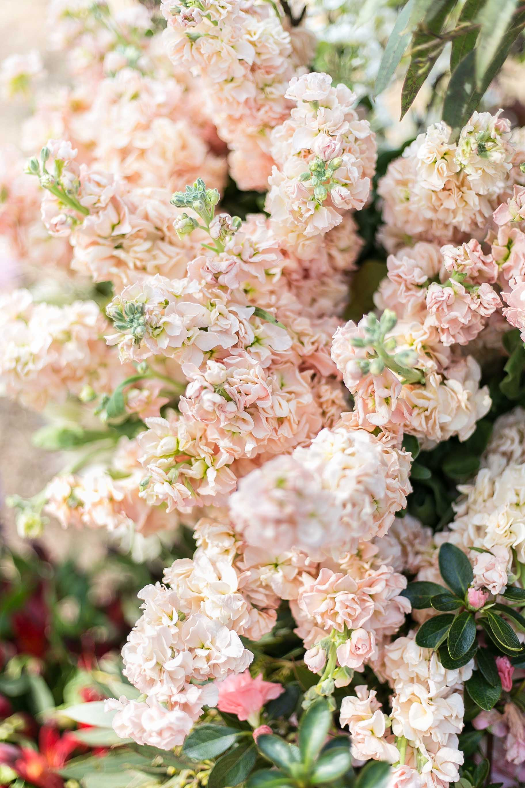 Cottonwood and Co - peachy pink stock flowers