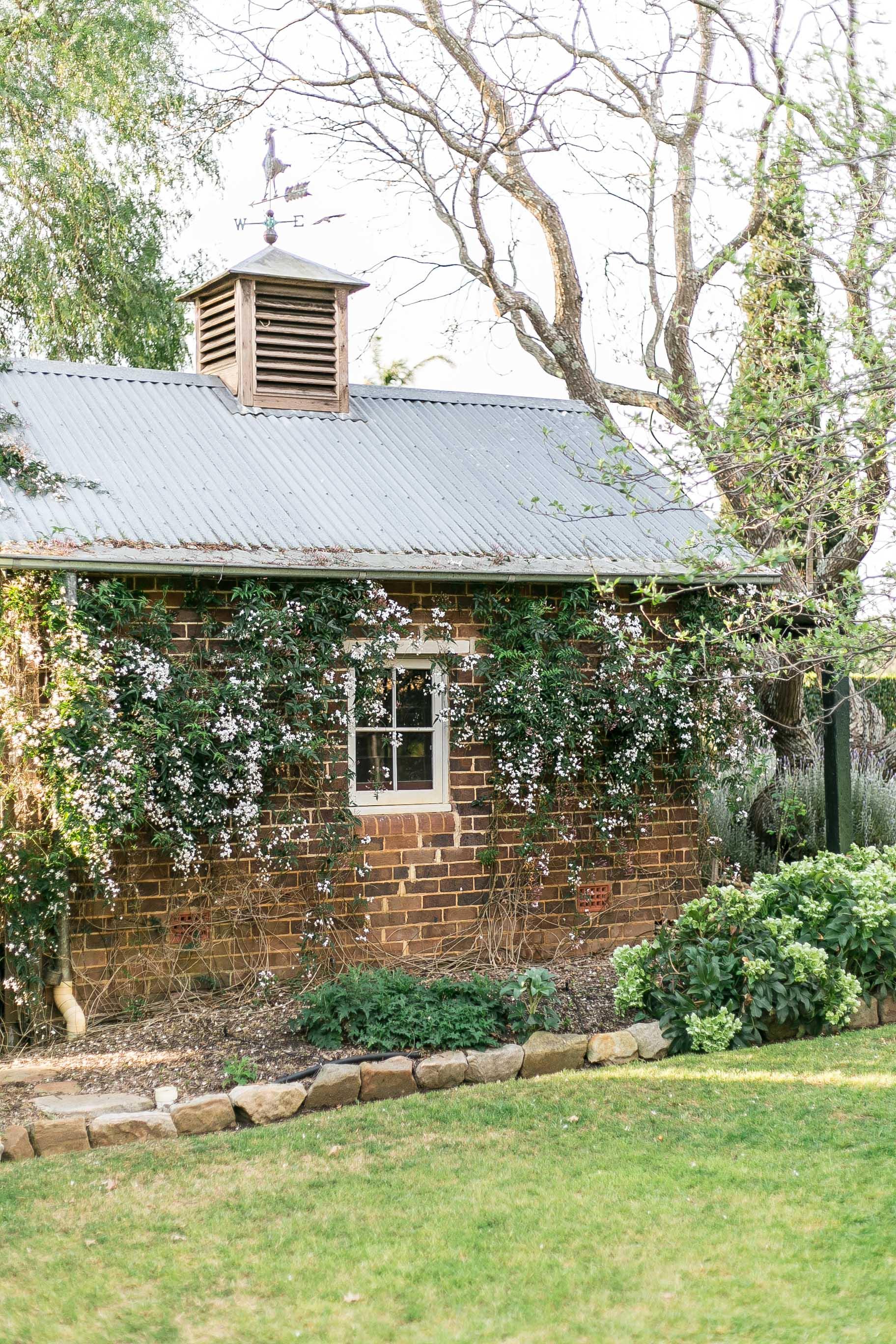 Brick barn climbing vine