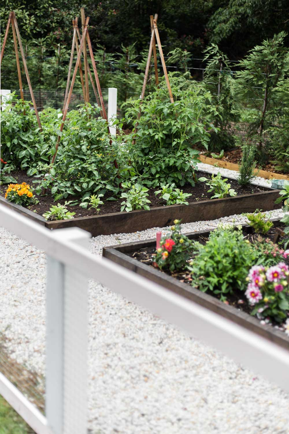 Cottonwood and Co - our country kitchen garden